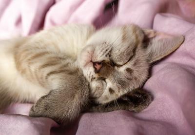 Няша котенок