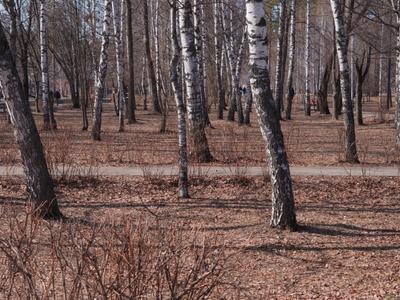 Роща Весна пейзаж природа деревья река березы
