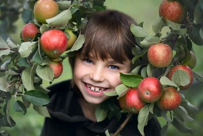 Яблочное счастье