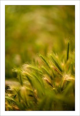 Былие травное _