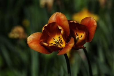 Дарите женщинам цветы лето жара цветы