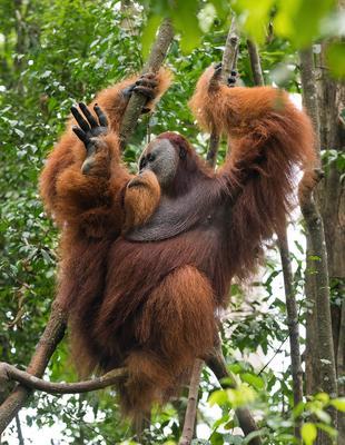 Привет, земляне! Суматра Индонезия