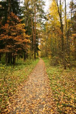 Осеннею тропою...