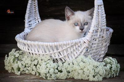 Cat in white кошка котенок киса