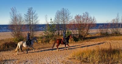 Осенняя прогулка в дюнах пляж песок дюны финский залив лошади прогулки осень девушки