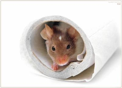 Зачем разбудили? мышь соня