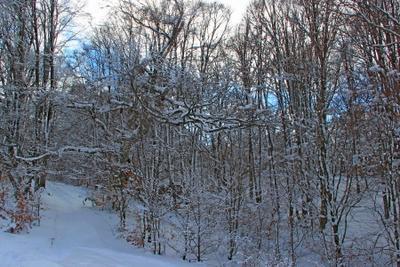 *** ай-петри зима лес