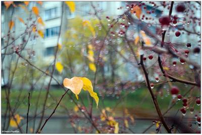 ...переменная облачность, осадки маловероятны... осень дождь листок