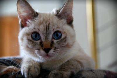 *** яркие глаза котенок любопытная