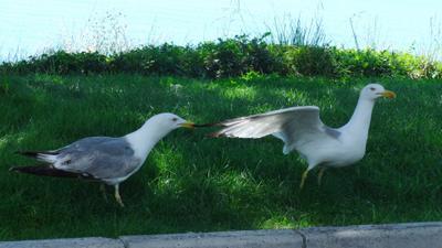Ну, куда же ты? чайка чайки трава море