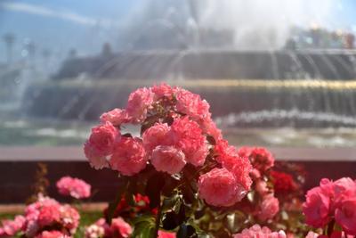 Городские цветы Москва ВДНХ цветы фонтан