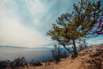 Байкал Байкал дерево пейзаж озеро вода облака