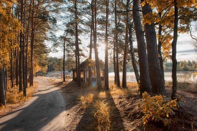 *** природа пейзаж отдых лес дом дорога осень