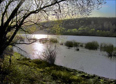 Первая зелень. река даль лес дерево берег первая зелень