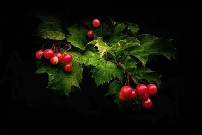 Красно ягода