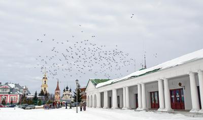 Взмывая над городом суздаль путешествия зима птицы