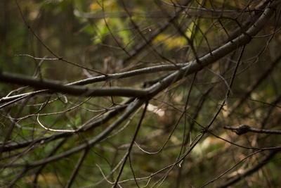 Ветки (twigs) 2 Ветки twigs Ревда природа лес