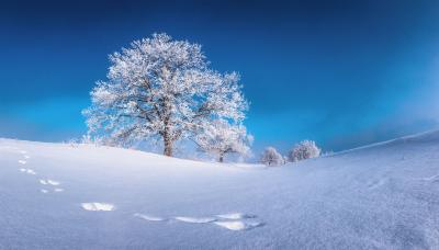 По следам зайца Иней зима дерево мороз