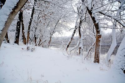 Первые следы  на берегу снег река пейзаж зима