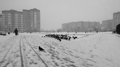 *** зима