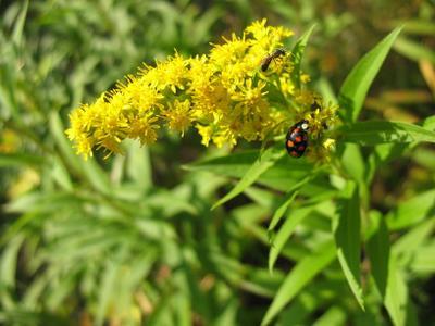 Кто быстрей!? природа осень цветы флора фауна насекомые