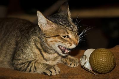 да ну наааа!!!..... кошка шок граната РГО