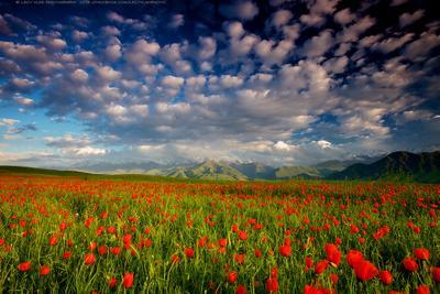 Мечты о Весне lazy_vlad lazyvladphoto bishkek kyrgyzstan landscape mountains poppies spring бишкек киргизия кыргызстан горы маки весна