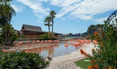 Райская зарисовка фламинго, пальмы