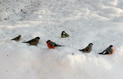 Зимние смотрины птички