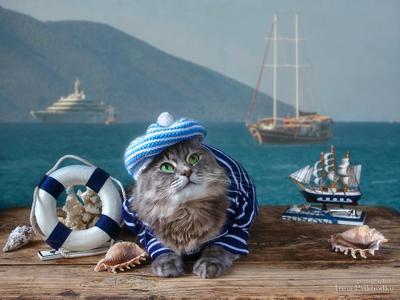***Мариман Масяня фото животных кошка Масяня морская тема портрет