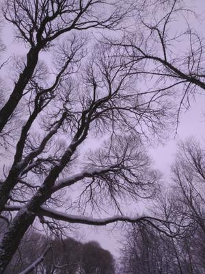 Зима и сумерки Коломенское зима зимний пейзаж снежная деревья