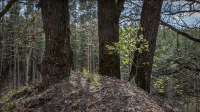 Молодо - зелено. природа лес весна