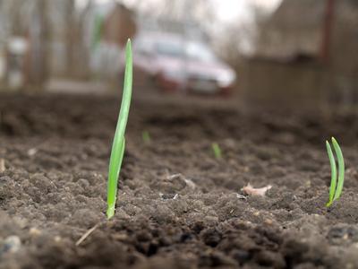 мир трава, лук, весна, грядка, мираж
