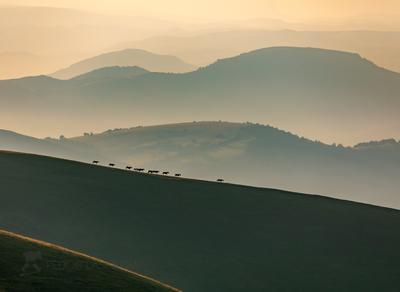 Лошади в горах Горы гора Кавказ лошади рассвет туман дымка даль горизонт холмистый лето табун