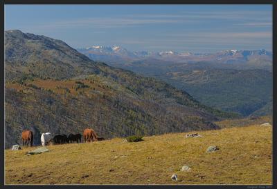 Алтайская открытка Казахстан Алтай горы осень Рахмановские Ключи