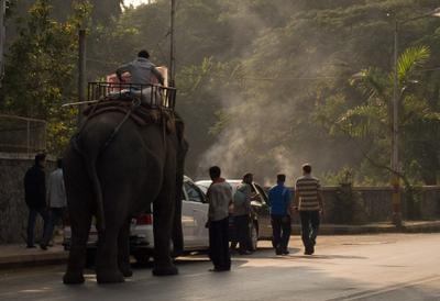 утренний слон слон, улица, индийский слон, Индия