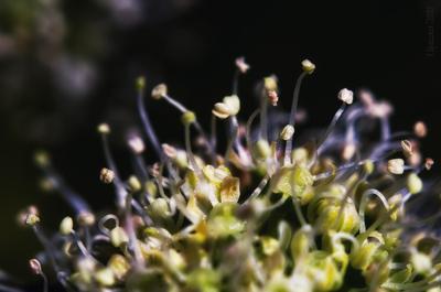 пыльники