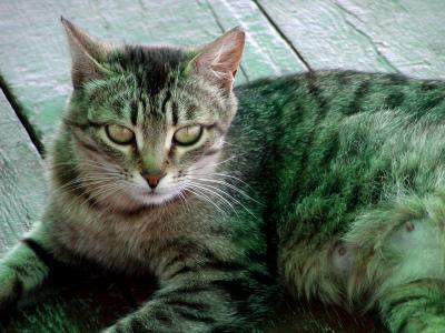 Зеленая Кош-Кош