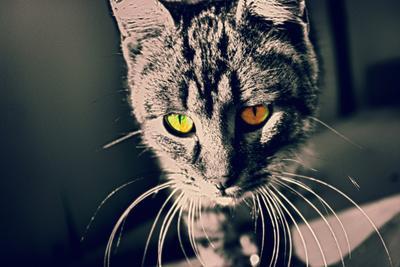 Мурзик кошка