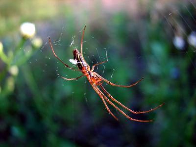 *** лето паук паутина макро