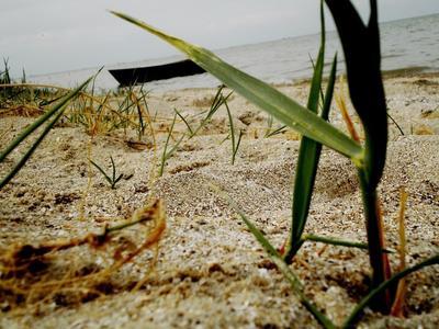*** море камыш река рыбалка лодка песок