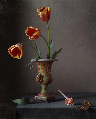 Цветение тюльпана