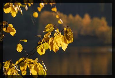 Последнее тепло осени токсово осень листья озеро