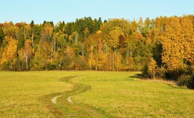 Дорога убегала в осень ... осень дорога