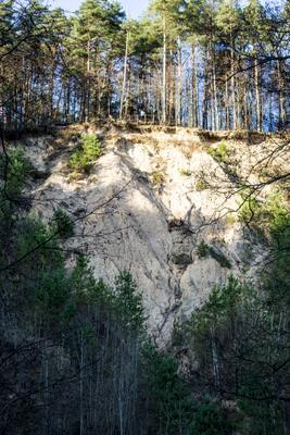 Обрыв лес