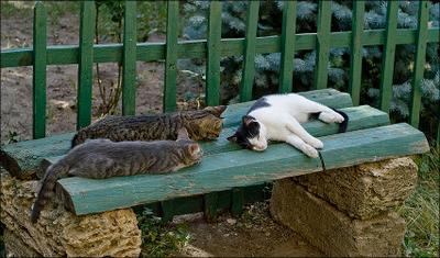 Трёхспальная скамья Кошки или коты три штуки спят скамья
