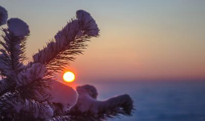 Капелька солнца солнце закат ель ёлка иголки еловые еловая лапа ветка небо снег зима горизонт