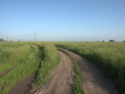 Дорога в лугах природа затон утро шиповник