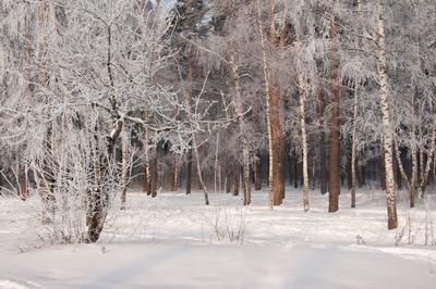 Прогулка при легком морозце