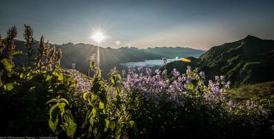 Утро в горах солнце горы облако цветы крапива на просвет